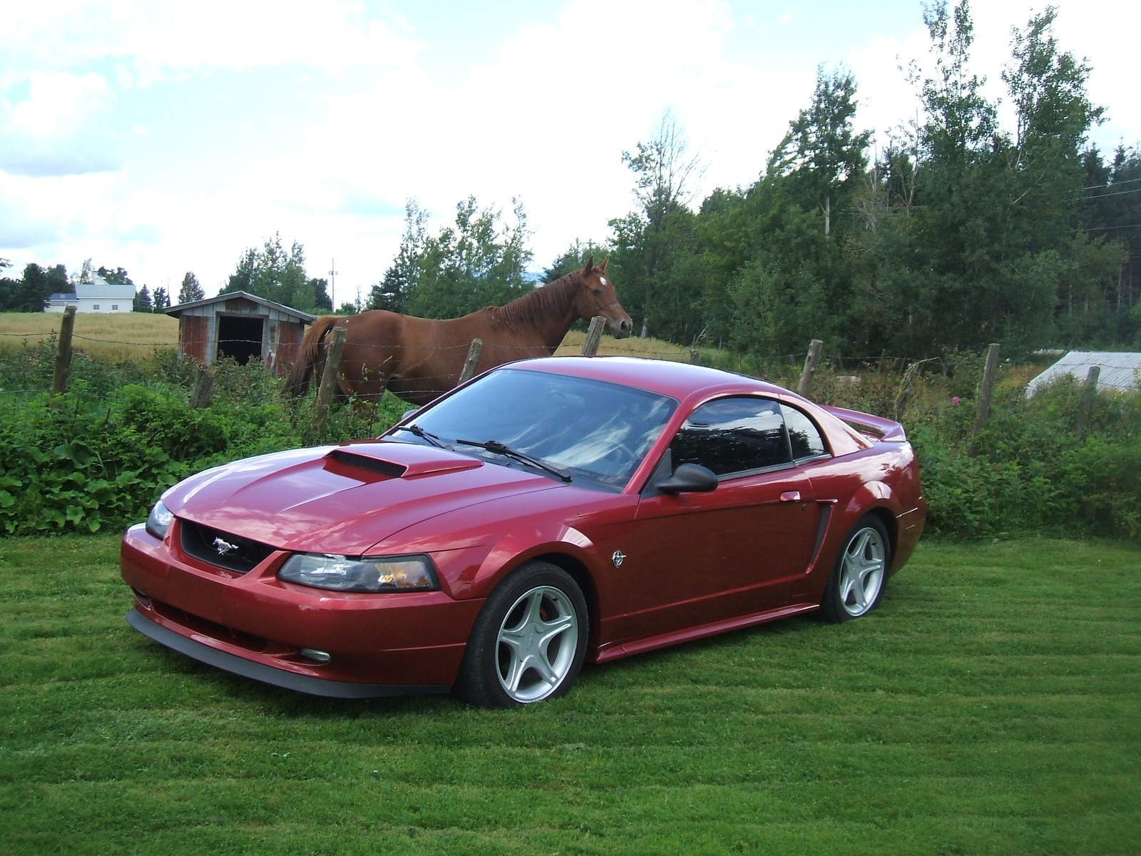 Download ford mustang 1999 2 jpg